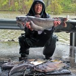 20 lb blue catfish