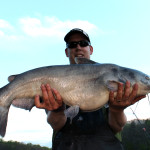 blue catfish caught on live shad (24 lbs)