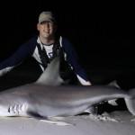 Sand bar shark
