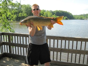 A nice, average common carp from my backyard.