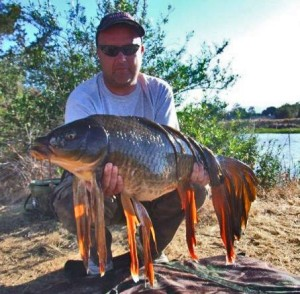 Fantailed carp