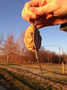 A NGT method feeder loaded with oatmeal and corn bait.