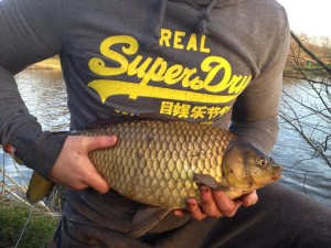 Large crucian carp