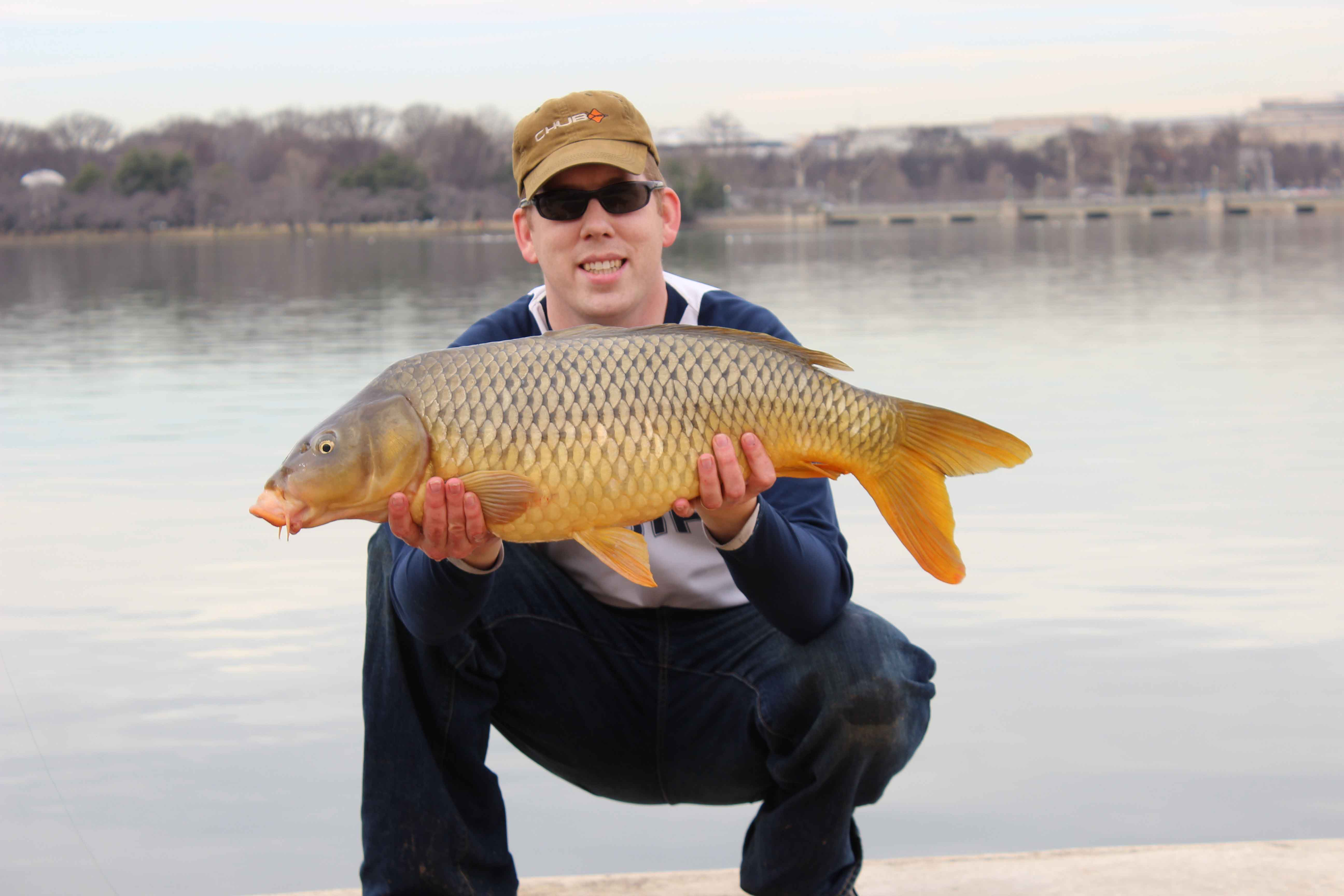 Best winter stick mix for carp for What does carp mean