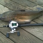 Few things are as fun as catching a channel catfish.