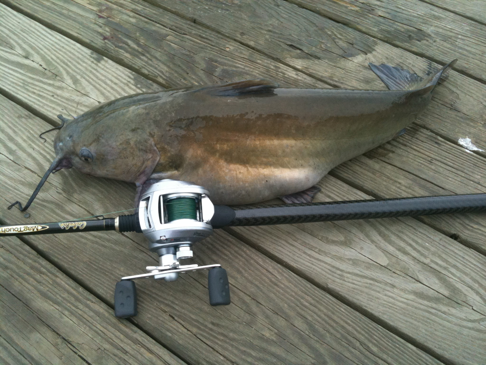Channel Catfish Tactics and Baits - CatsandCarp.com
