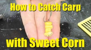 Check out this YouTube video on using sweet corn to catch carp.