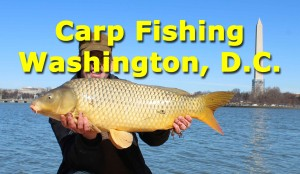 Carp Fishing in Washington DC
