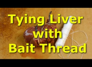 Tying chicken liver with bait thread