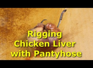 Rigging Chicken Liver with Pantyhose