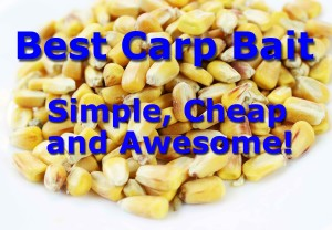 Feed corn, simple cheap and effective carp bait.